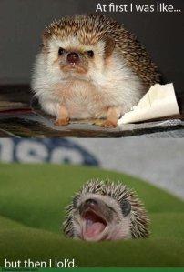hedgehog_lold